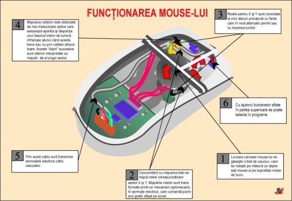 Functionarea mouse-lui 1