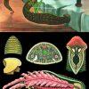 Meduza 4