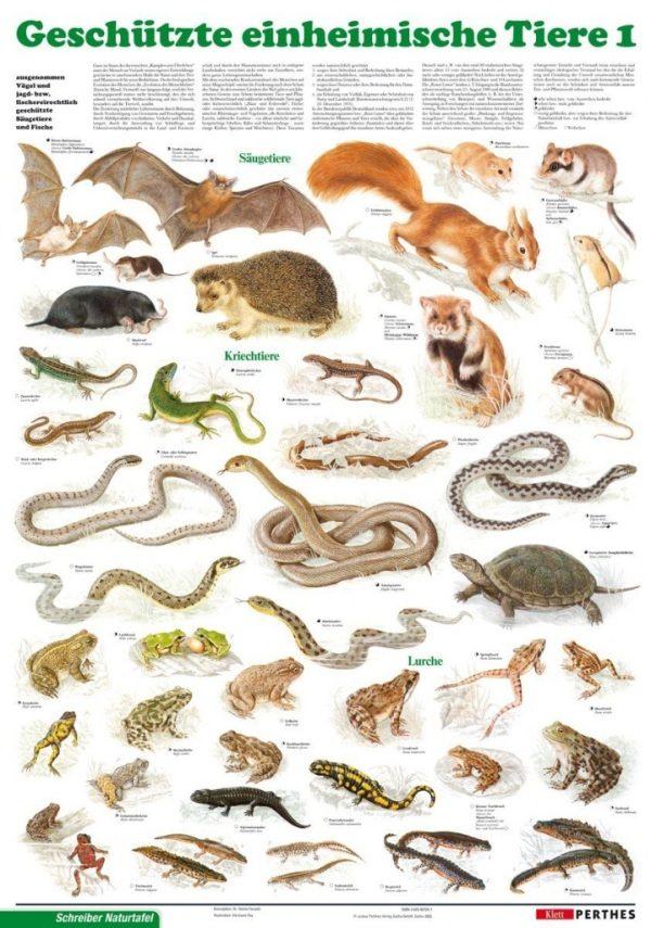Animale ocrotite I. 1