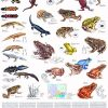 Reptilele Europei Centrale 5