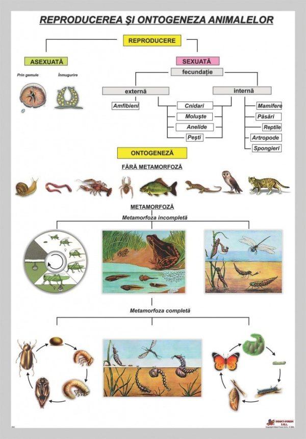 Reproducerea si ontogeneza animalelor – Fara §ipci 1