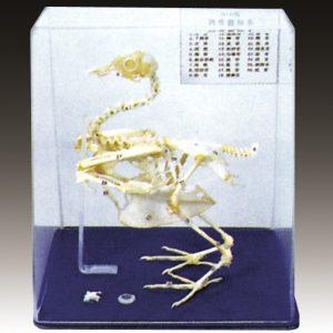 Modele Zoologie