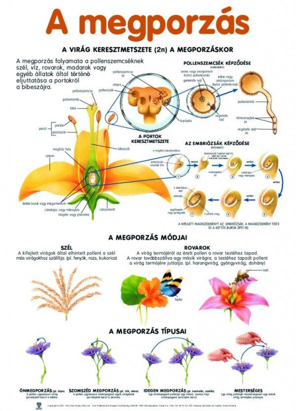 Set planse botanica 3