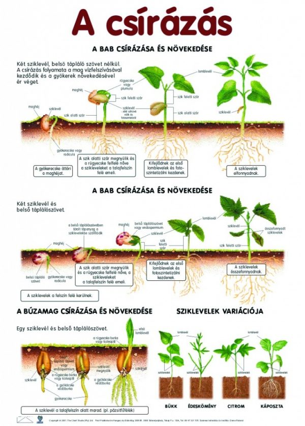 Set planse botanica 2