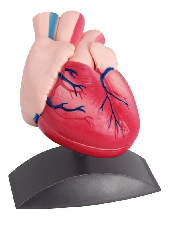 Mulaj inima 1
