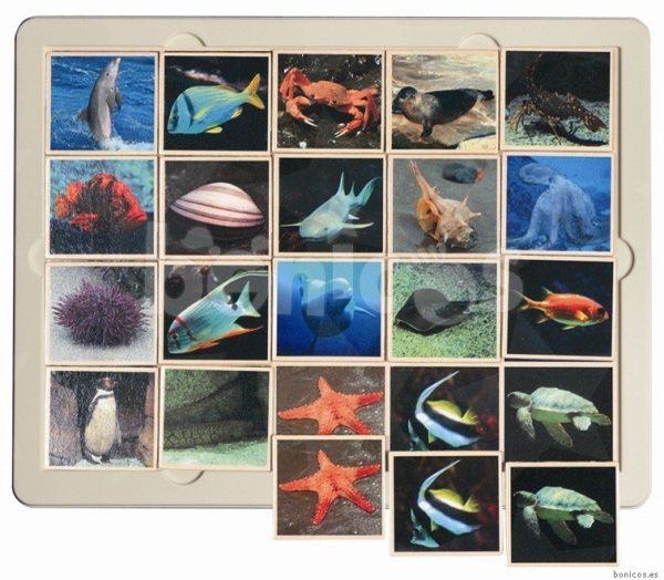 Fauna marina - joc loto 1