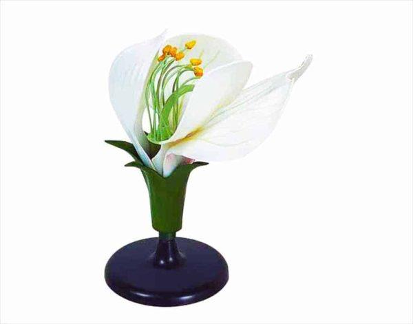 Floare de Mazare 1