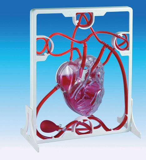 inima functionala 11